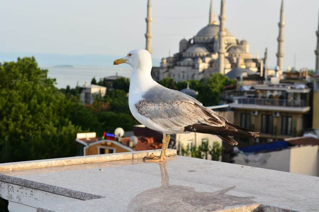 Muslim friendly things to do in Turkey