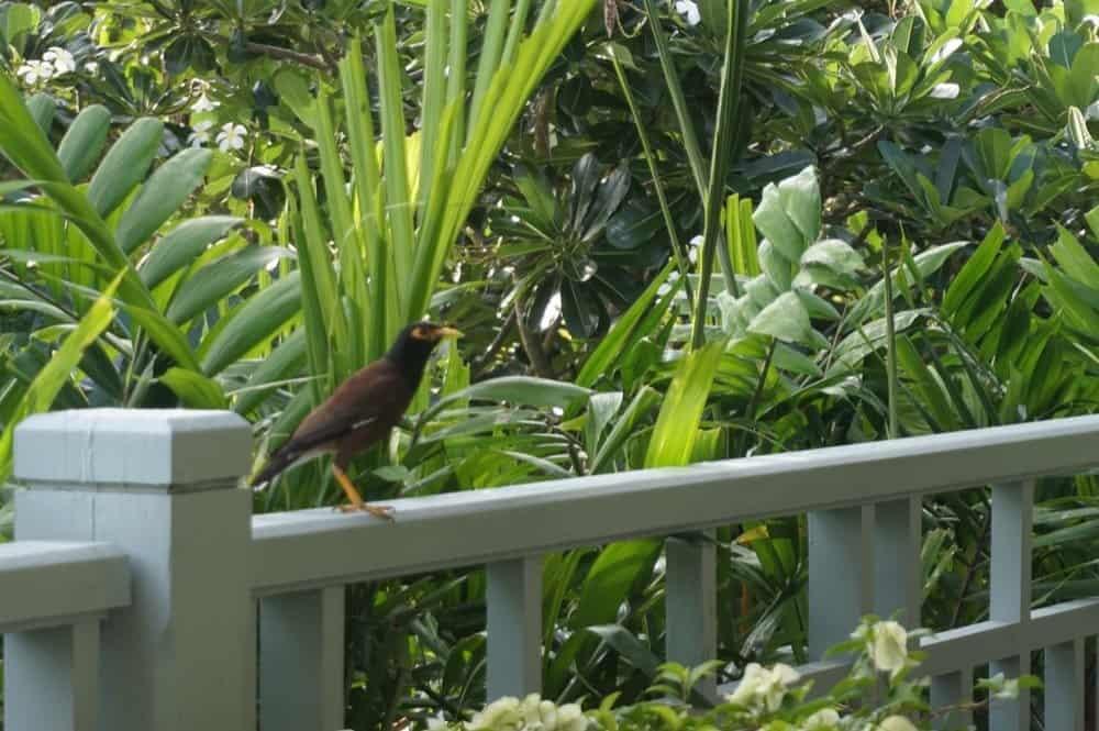 Amatara Resort and Wellness Review 18resized