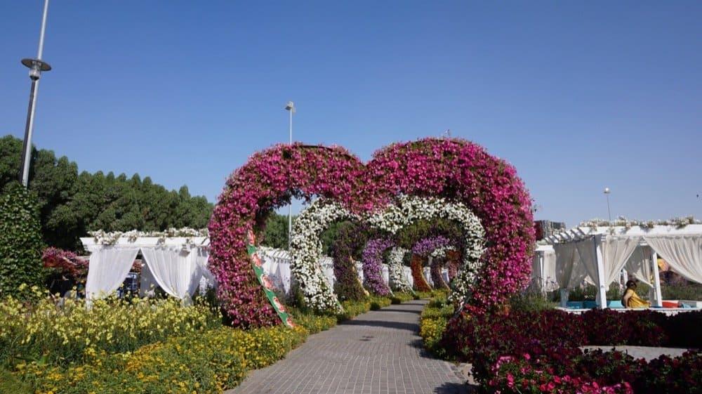 miracle garden dubai1049resized