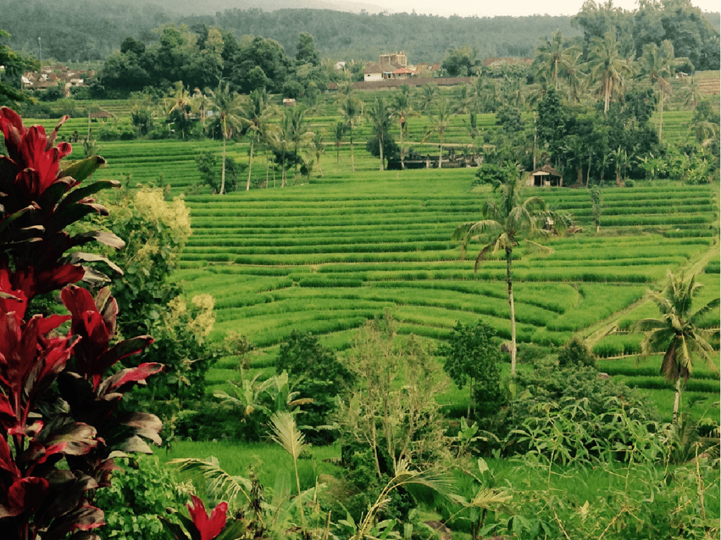 10 Cool Things Every Muslim Should Do in Bali -Tasting Local Food is only part of it