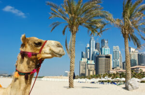 hotels in Dubai cheap and best